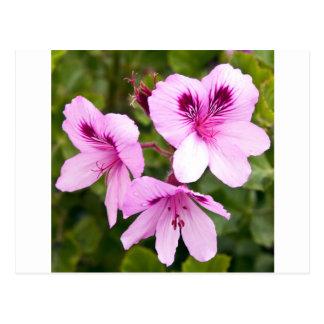 Hechizos rosas de primavera postal
