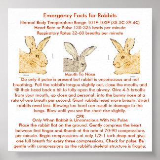 Hechos de la emergencia para los conejos gigantes posters