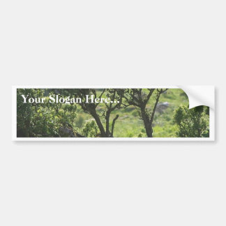 Hedge Green Tree From Mountain Car Bumper Sticker