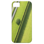 Hedge in The Hamptons iPhone 5 Case