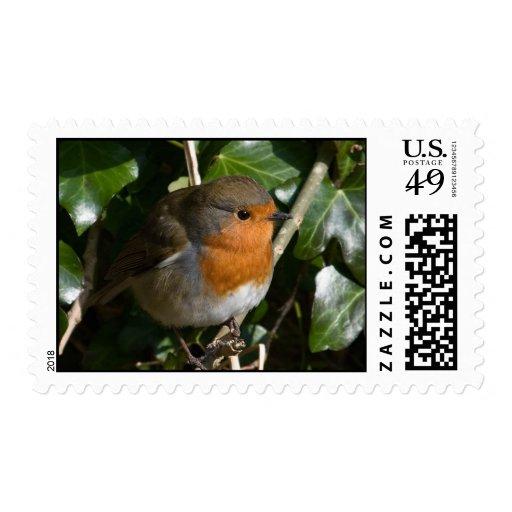 Hedge Robin Postage