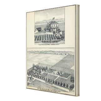 Hedge Row Vineyard, Fresno Canvas Print