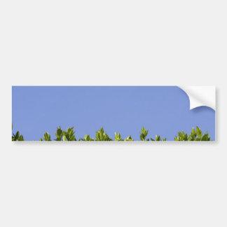 Hedge Tree Green Car Bumper Sticker