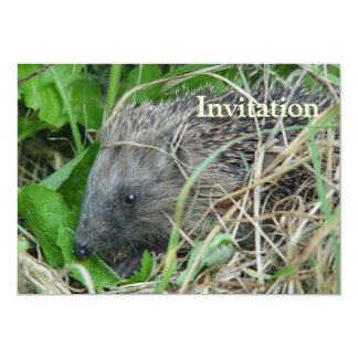 Hedgehog #1 card