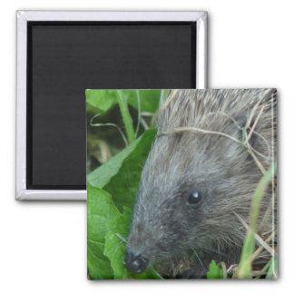 Hedgehog #1 magnet