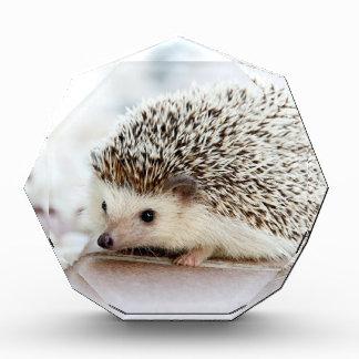Hedgehog Award