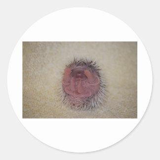 Hedgehog Baby Hands Up Classic Round Sticker