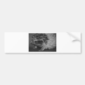 Hedgehog Baby in Black and White Bumper Sticker
