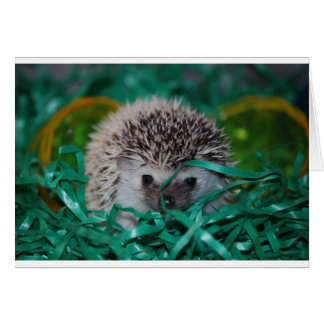 Hedgehog Baby in Easter Grass Card