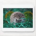 Hedgehog Baby in Easter Grass Mousepads