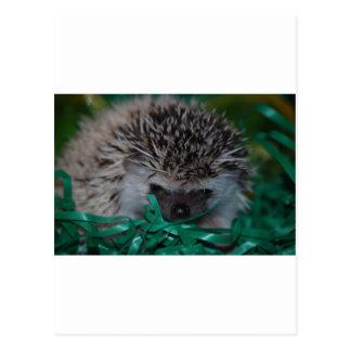 Hedgehog Baby in Easter Grass Postcard