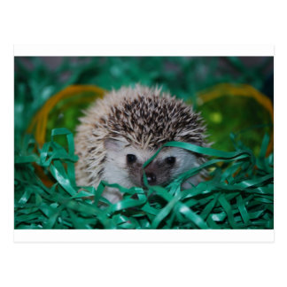 Hedgehog Baby in Easter Grass Postcard