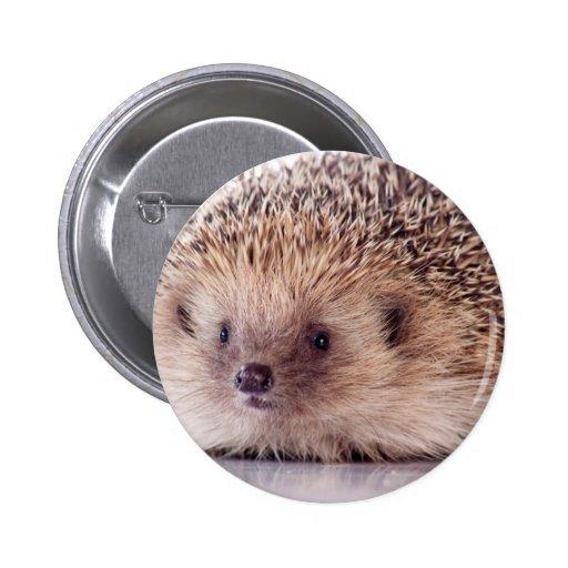 Hedgehog, Button