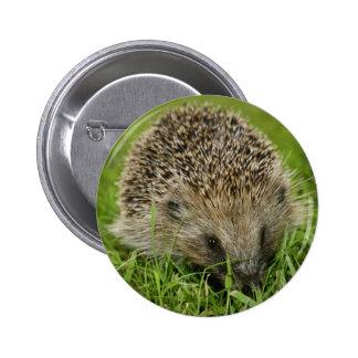 Hedgehog Button Badge