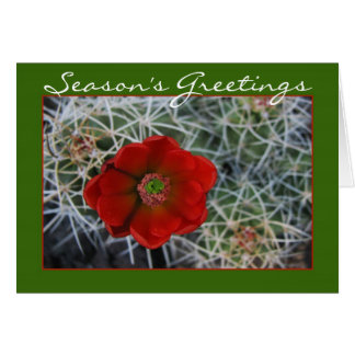 Hedgehog Cactus Holiday Card