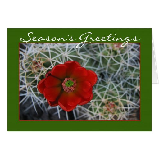 Hedgehog Cactus Holiday Card