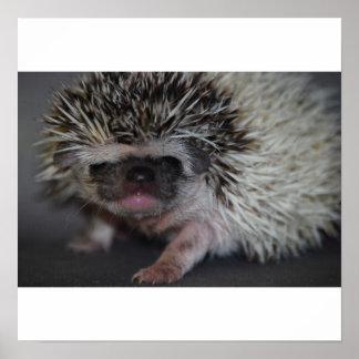 Hedgehog Canvas Posters