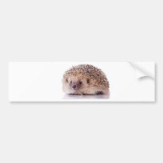 Hedgehog, Car Bumper Sticker