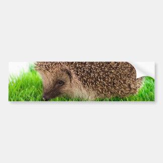hedgehog car bumper sticker