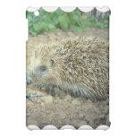 Hedgehog Care  iPad Case