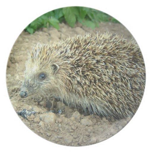Hedgehog Care  Plate