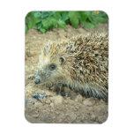 Hedgehog Care  Premium Magnet Rectangle Magnet