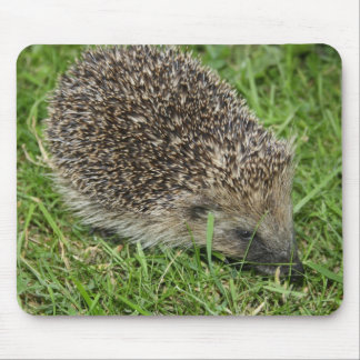 Hedgehog Close-up Mousepad