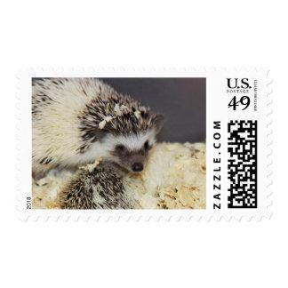 Hedgehog – Does My Hair Look Okay? Postage