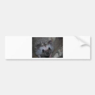 Hedgehog Face Bumper Sticker