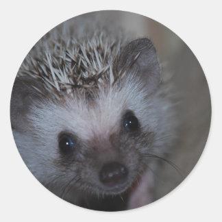 Hedgehog Face Classic Round Sticker