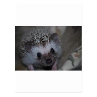 Hedgehog Face Postcard