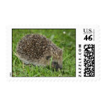 Hedgehog Feeding Postage