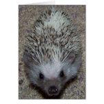 Hedgehog Greeting Card