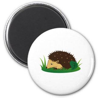 Hedgehog hedgehog magnets