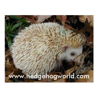 Hedgehog in leaves postcard