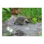 Hedgehog invitation - customize 13 cm x 18 cm invitation card