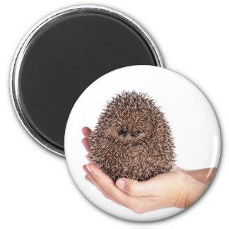 hedgehog 2 inch round magnet