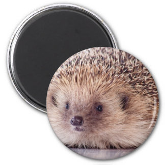 Hedgehog, Refrigerator Magnet