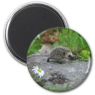 Hedgehog magnet - customizable