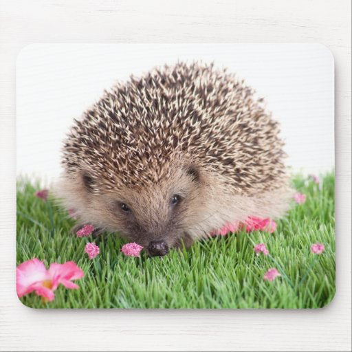 hedgehog, mousepads