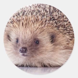 Hedgehog, Pegatina Redonda