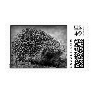 Hedgehog Postage Stamps