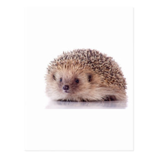 Hedgehog, Postcards