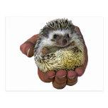 Hedgehog Postcards