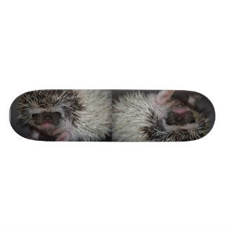 Hedgehog Skateboard