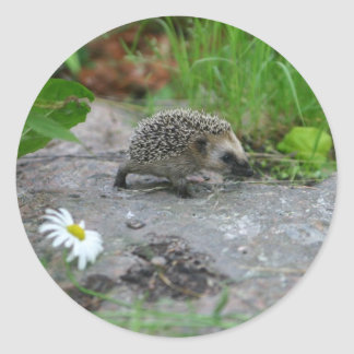 Hedgehog stickers - customizable