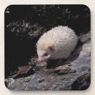 Hedgehog taking a stroll beverage coaster