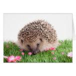 hedgehog tarjeta