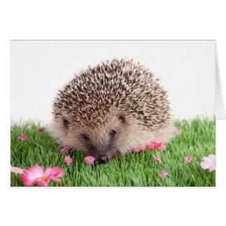 hedgehog tarjeta de felicitación
