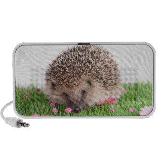 hedgehog travelling speakers